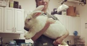Moar bunny!!!