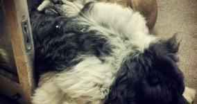 aint's no pillow like a newfie pillow :)