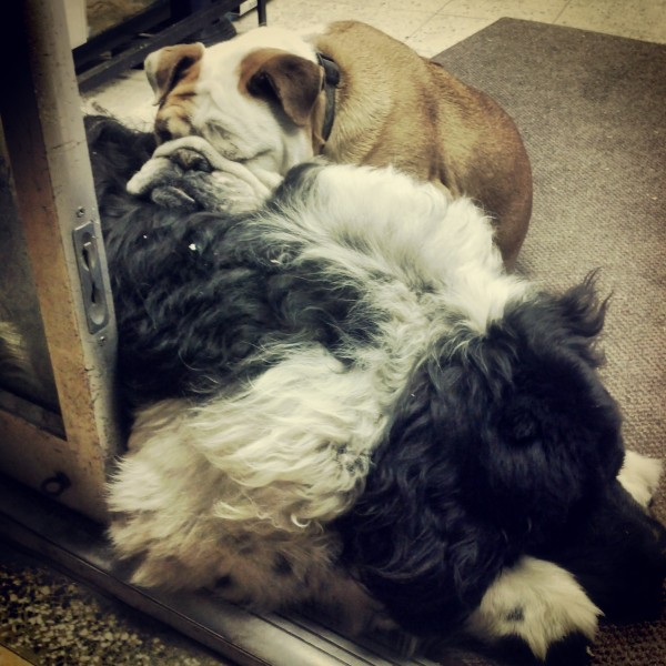 aint's no pillow like a newfie pillow :)
